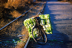 "China, Taiyuan, 2003. A farmer's bike holds the last of the day's pickings of ""bai cai,"" or cabbage, near an abandoned railway in Taiyuan.."