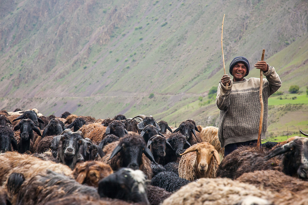 Portrait of a shepherd steering his goats and sheep along a highway in Tajikistan