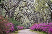 Afton Villa Gardens; St. Francisville, Louisiana