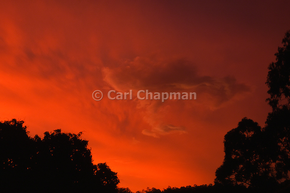 Phoenix rising - Sunset after a rain storm over the bush, Australia