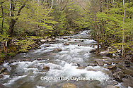 66745-039.07 Middle Prong of the Little Pigeon River in spring, Greenbrier Area, Great Smoky Mountain National Park, TN