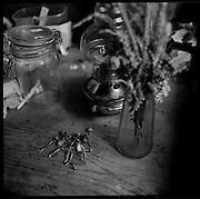 Champignons Psilocibine. Garde-génisse dans les préalpes. Le travail pénible de garde-génisse fut souvent fait par des hommes seuls. Die harte Arbeit der Rinderhirten war jahrzehntelang reine Männerarbeit. Die Bauern versorgen die Angestellten oft mehr schlecht als recht, mit Lebensmitteln, Tabak und Alkohol. In der Einsamkeit der Berge ist de Griff zu Flasche leicht. © Romano P. Riedo