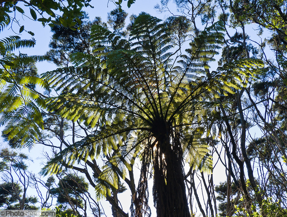 Tree fern silhouette pattern, Abel Tasman National Park, South Island, New Zealand.