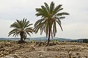 Israel, Jezreel Valley, Tel Megiddo National park. Megiddo is a tel (hill) made of 26 layers of the ruins of ancient cities in a strategic location at the head of a pass through the Carmel Ridge, which overlooks the Valley of Jezreel from the west.