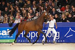 437 - Glamour Boy<br /> KWPN Stallion Selection - 's Hertogenbosch 2014<br /> © Dirk Caremans