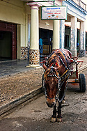 Horse and cart in front of a restaurant in Bahia Honda, Artemisa, Cuba.