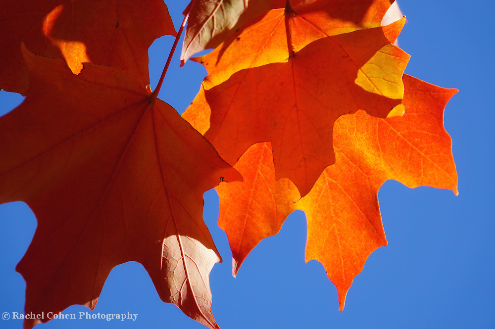 &quot;Sunlight Serenade&quot; <br />