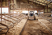 Skid Steer working in a dairy barn around the cows stalls. shot as a Environmental Portraiture on a Fuji