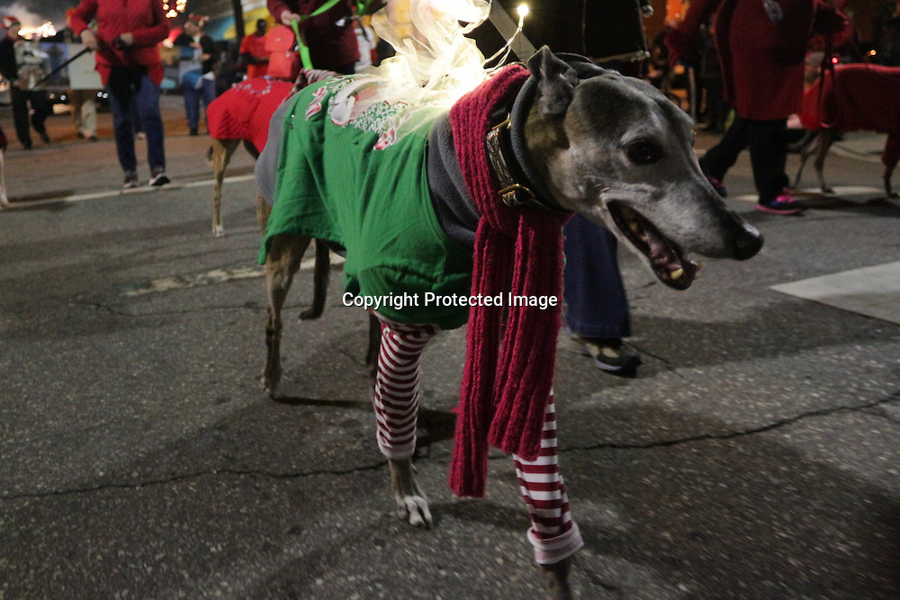 Greyhound Friends of North Carolina participate in the 12th Annual Wilmington Holiday Parade Sunday December 7, 2014 in Wilmington, N.C. (Jason A. Frizzelle)