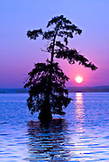 A serene sunrise with the sun just rising underneath a cypress tree on Reel Foot Lake. Near Tiptonville, TN. Reel Foot Lake