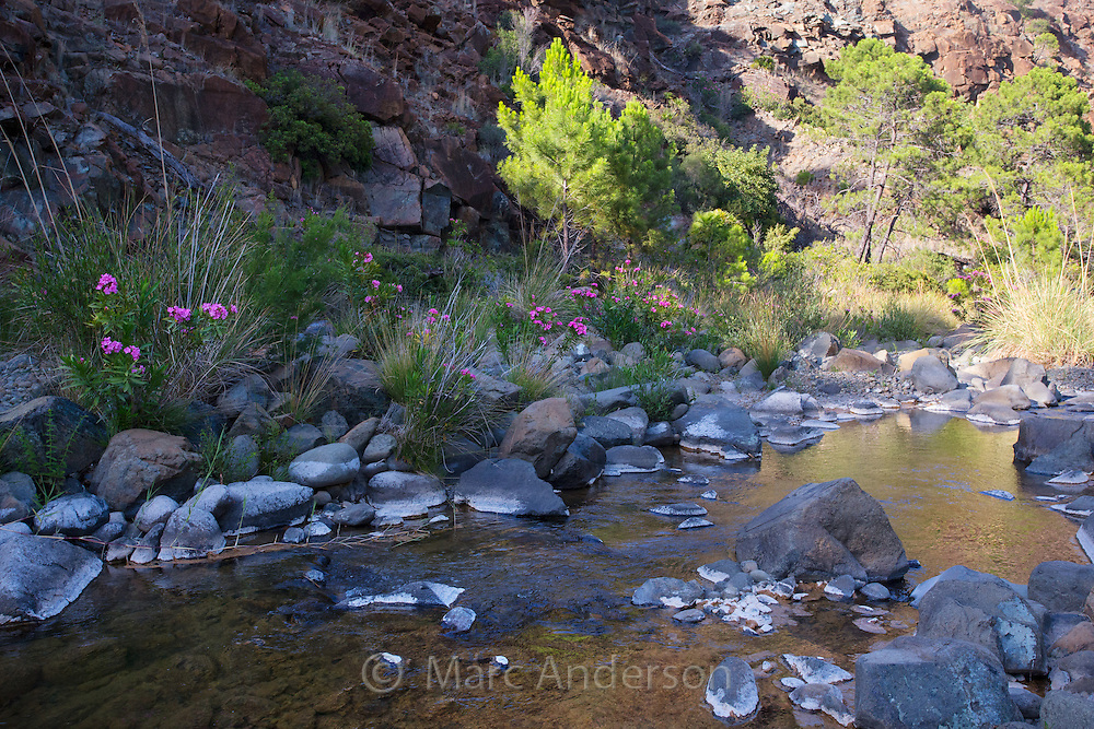 Rocky stream and vegetation in Andalucia, Spain