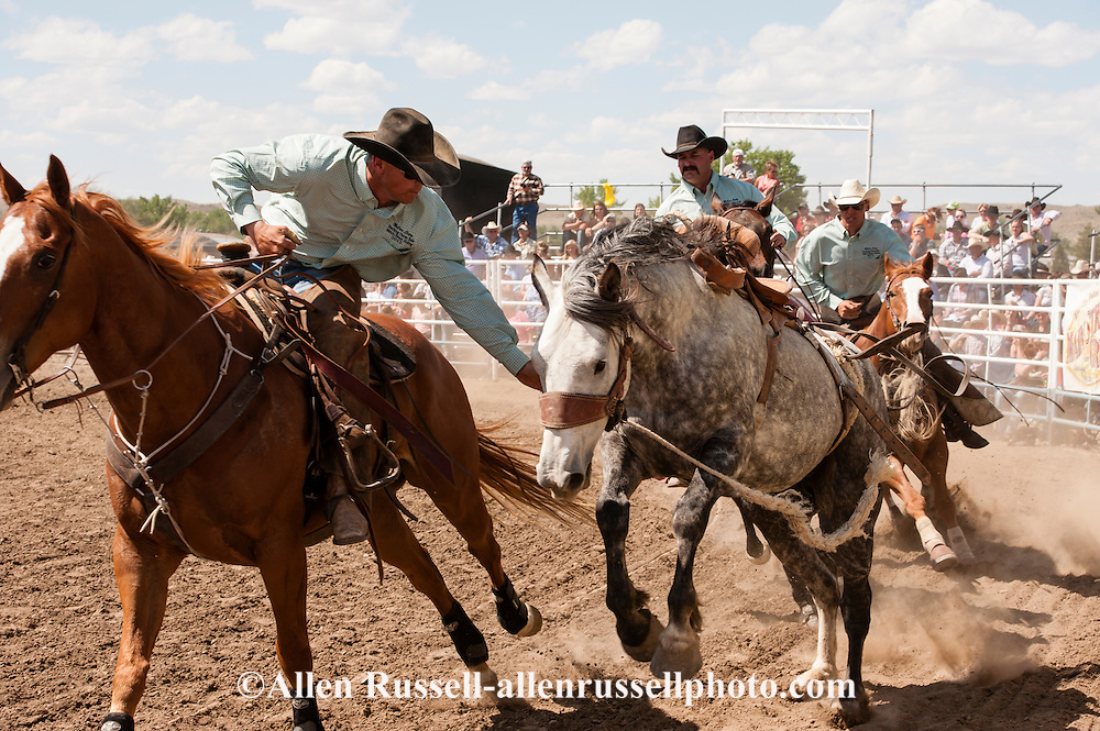 Pickup men, Brent Morrison, Cody Shaw, Jay Shaw, work saddle bronc, Miles City Bucking Horse Sale, Montana, MODEL RELEASED, PROPERTY RELEASED on riders and their horses only..