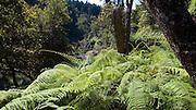 Hiking, Waimea Canyon, Kokee State Park, Kauai, Hawaii