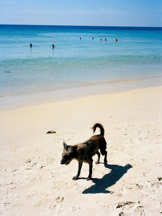 Thai beach dog enjoys the sun on Karon Beach