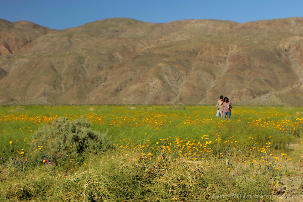 USA, California, San Diego County. Couple amidst Desert Wildflowers of Anza-Borrego.