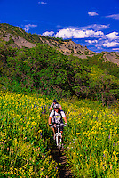 Mountain biking, Rim Creek Trail, Snowmass Village (Aspen), Colorado USA.