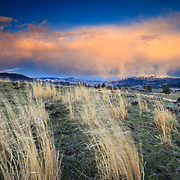 Winds blow grasses on a hillside in the Lamar Valley of Yellowstone at sunset.