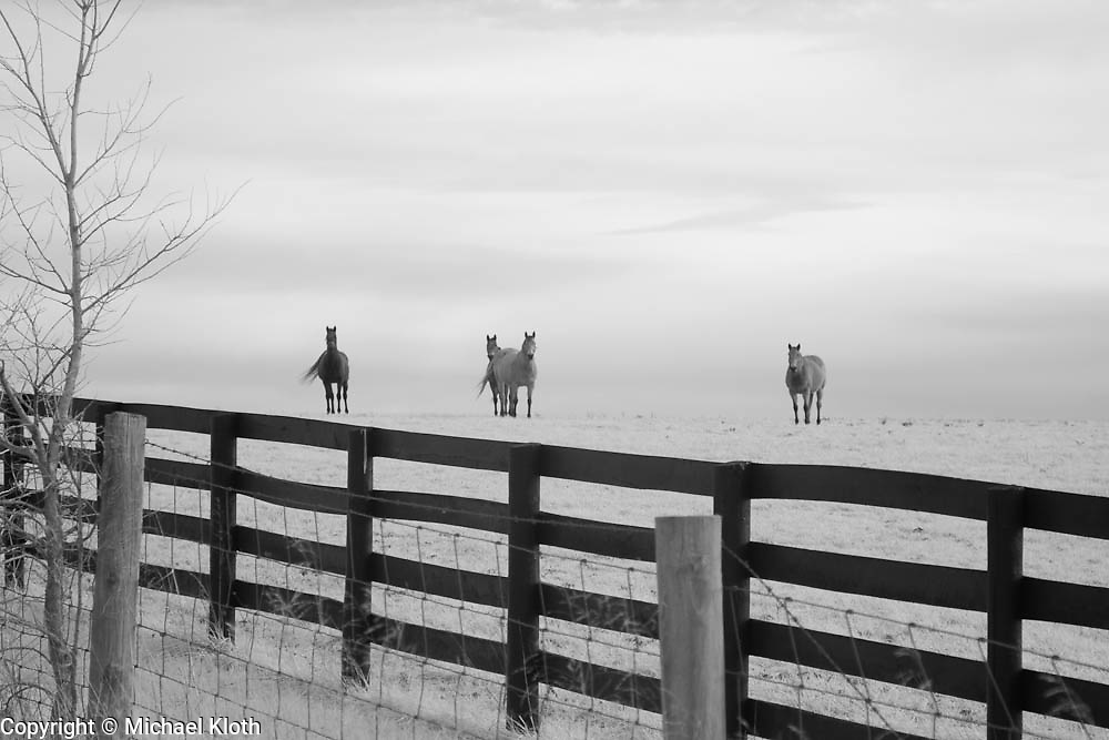 Four horses watching from their side of the fences in rural Kentucky.  Infrared (IR) photograph by fine art photographer Michael Kloth. Black and white infrared photographs