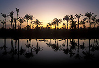 canal and reflected palm trees in rural Egypt