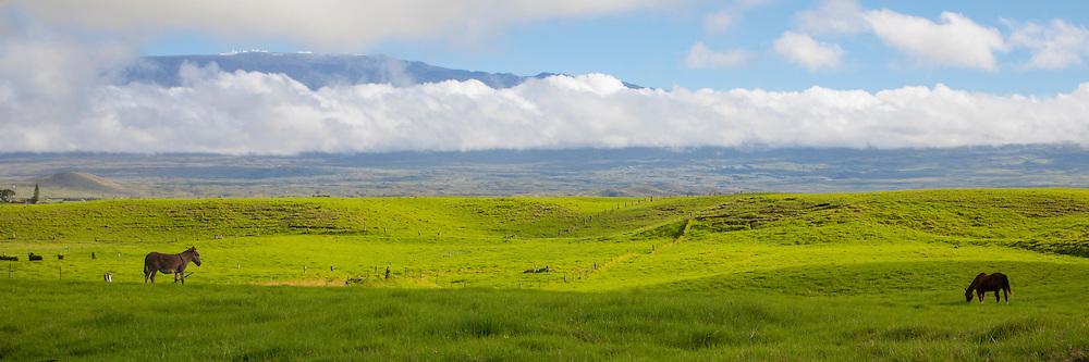 Ranch Land , Waimea, Kamuela, Island of Hawaii