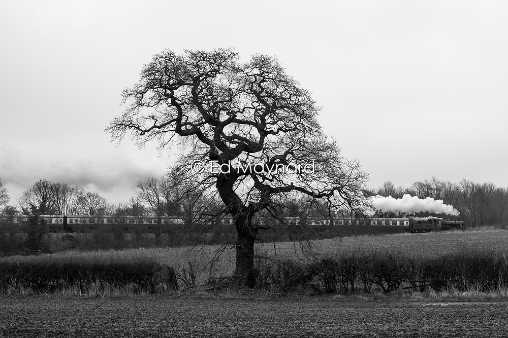 Steam train passes through the countryside on the Great Central Railway, Rothley, Leicestershire, England.<br /> Photo: Ed Maynard<br /> 07976 239803<br /> www.edmaynard.com