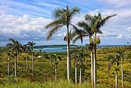 Cabañas area, Artemisa Province, Cuba.