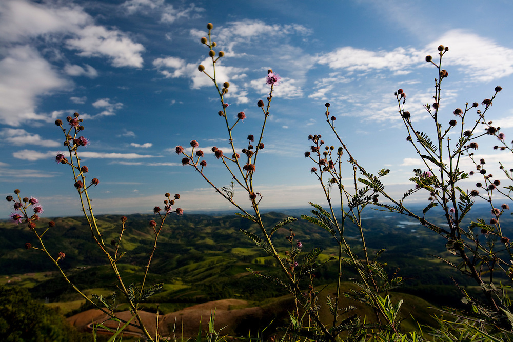 Pocos de Caldas_MG, Brasil...Flores com vista panoramica das montanhas de Pocos de Caldas ao fundo...Flowers with the panoramic view of mountain in Pocos de Caldas in the background...Foto:LEO DRUMOND / NITRO