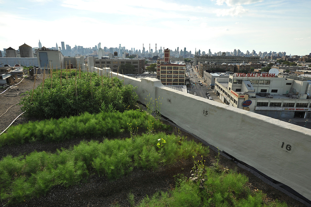 Brooklyn Grange: Additional shots for timeline