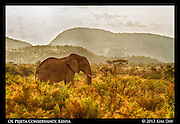 Elephant at Samburu<br /> Kenya - September 2012