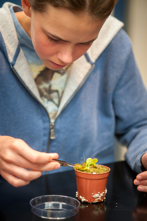 A young woman using tweezers to work with a Venus flytrap, an insect eating plant in College Park, Maryland
