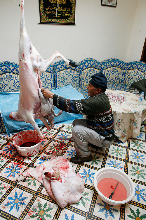 Marrakech, Maroc. 21 Decembre 2007..Aid El Kebir est une des fetes les plus importantes de l'Islam. ..Marrakesh, Morocco. December 21st 2007..The butcher is taking off the sheep's organs after cutting its throat..Eid Al-Adha. Eid Al-Adha is one of the most important celebrations in the Islam traditions.