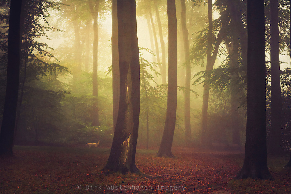 Foggy forest scenery on a fall morning - softly textured photograph