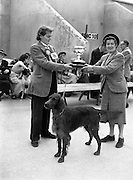 19/07/1952<br /> 07/19/1952<br /> 19 July 1952<br /> Dog show: All Breed Championship, 10th Annual Show of the Combined Canine Clubs at Terenure College,<br /> Templeogue Road Terenure Dublin. Mrs M.B. Ross, (Carrigfergus) Judge of Irish Setters, presenting the cup for the Gun-Dog Group to Miss P. Kelly, Monread House, Naas Co.  Kildare