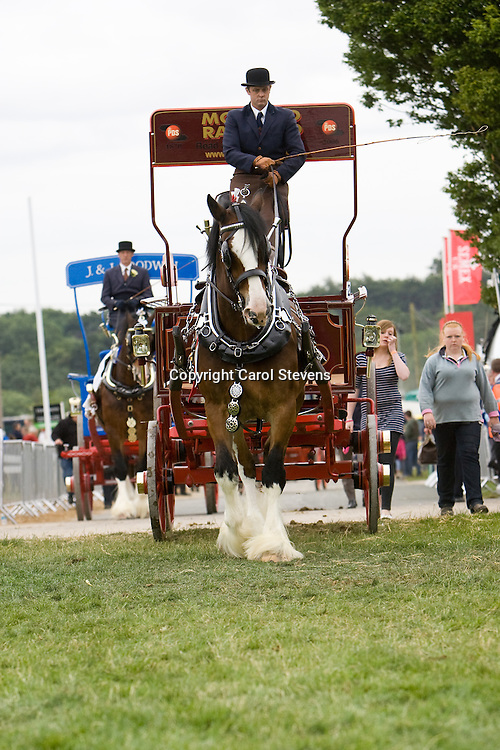 Heavy Horses at The Great Yorkshire Show 2010  Singles Turnouts Class
