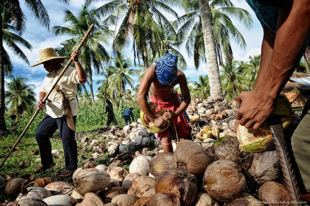 Die ganze Genossenschaft hilft mit beim Ernten und Schälen der Kokosnüsse.
