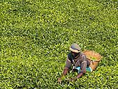 Futerra_Fuze Tea