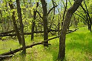 Seine River Forest<br />Winnipeg<br />Manitoba<br />Canada