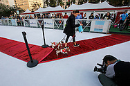 2月9日,在美国洛杉矶,为迎接节日到来,举办冰上節日狗狗服装造型比赛。一名狗主人跟她的狗走在冰上红地毯比赛。(新华社发 赵汉荣摄)<br /> A dog owner walks with her pets with costume in a red carpet strut across the ice rink during a holiday costume contest in Los Angeles, he United States, on Wednesday, December 9, 2015.  (Xinhua/Zhao Hanrong)(Photo by Ringo Chiu/PHOTOFORMULA.com)<br /> <br /> Usage Notes: This content is intended for editorial use only. For other uses, additional clearances may be required.