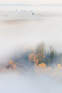 Bright fall colors show through the dense fog that shrouds the landscape, Grand Teton National Park