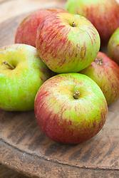 Apple 'Howgate Wonder'. Malus domestica