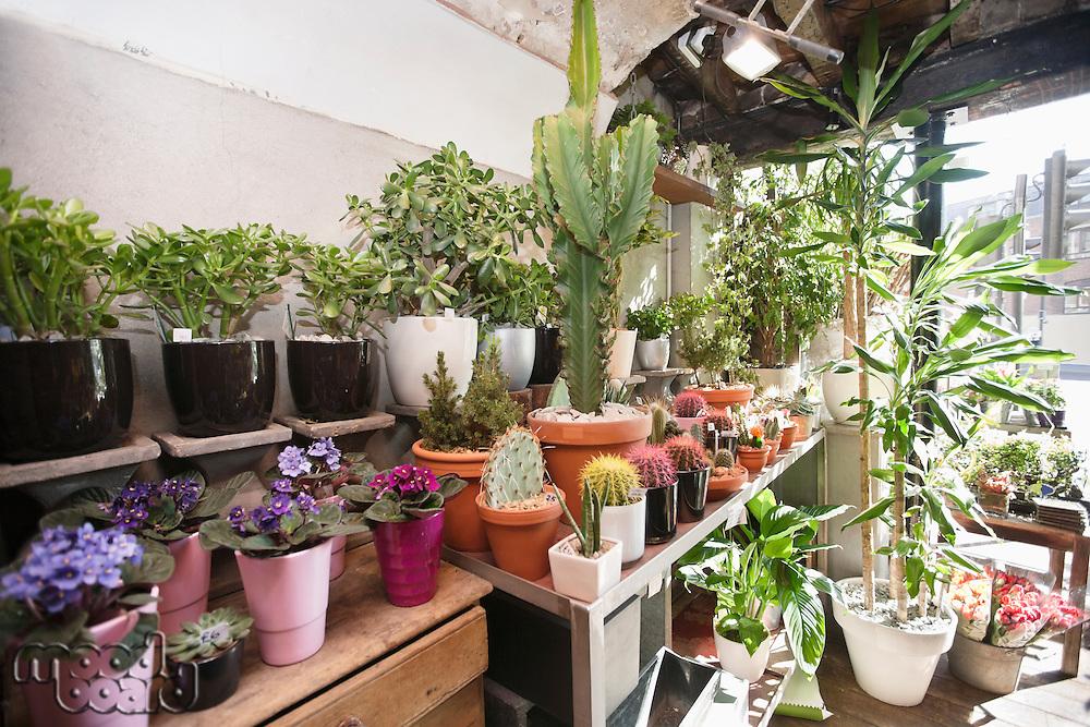 Huge varieties of flower in florist shop
