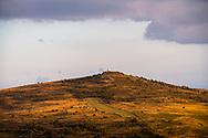 12/08/18 - PIERRE SUR HAUTE - PUY DE DOME - FRANCE - Estives sur les Hautes Chaumes - Photo Jerome CHABANNE