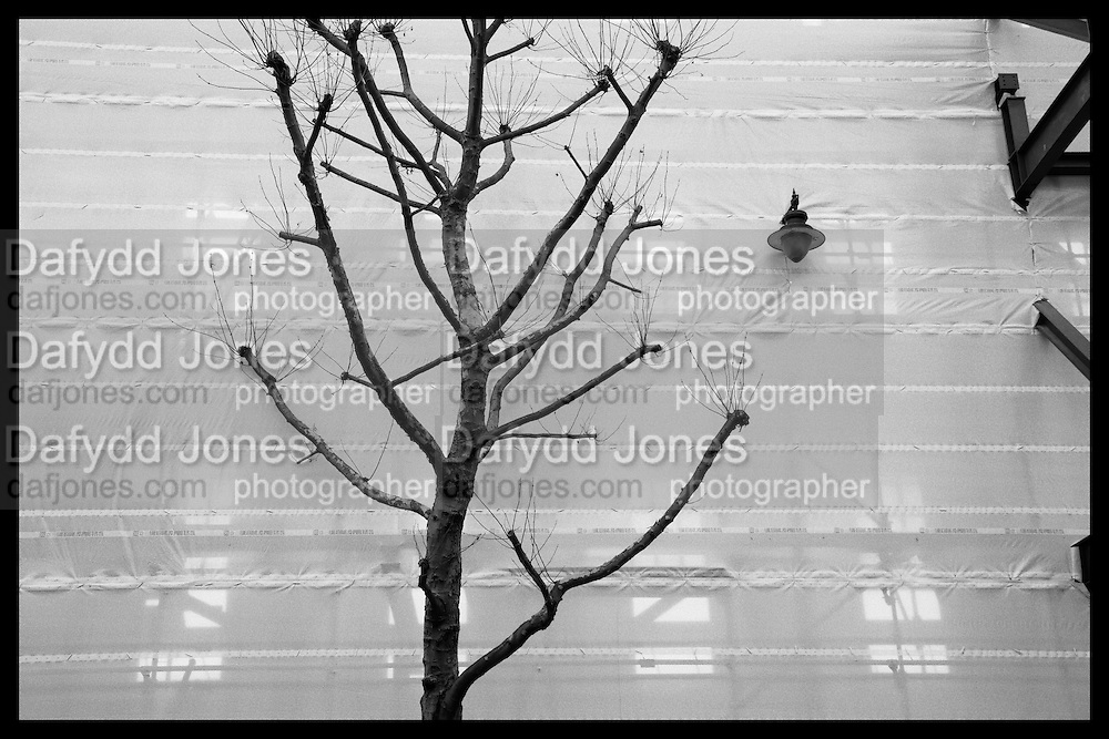Preserved Tree during demolition,  Bishopsgate near Liverpool St. London. 26 February 2016