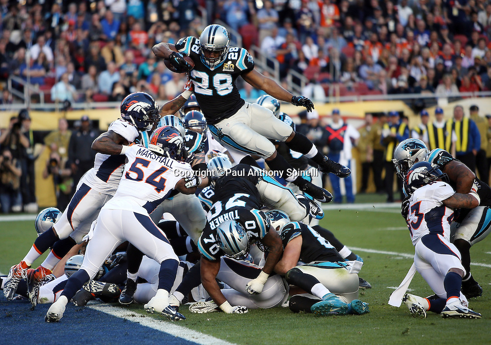 Carolina Panthers running back Jonathan Stewart (28) leaps over a pile of defenders while fighting off a tackle attempt by Denver Broncos inside linebacker Danny Trevathan (59) as he scores a second quarter touchdown that cuts the Broncos lead to 10-7 during the NFL Super Bowl 50 football game against the Denver Broncos on Sunday, Feb. 7, 2016 in Santa Clara, Calif. The Broncos won the game 24-10. (©Paul Anthony Spinelli)