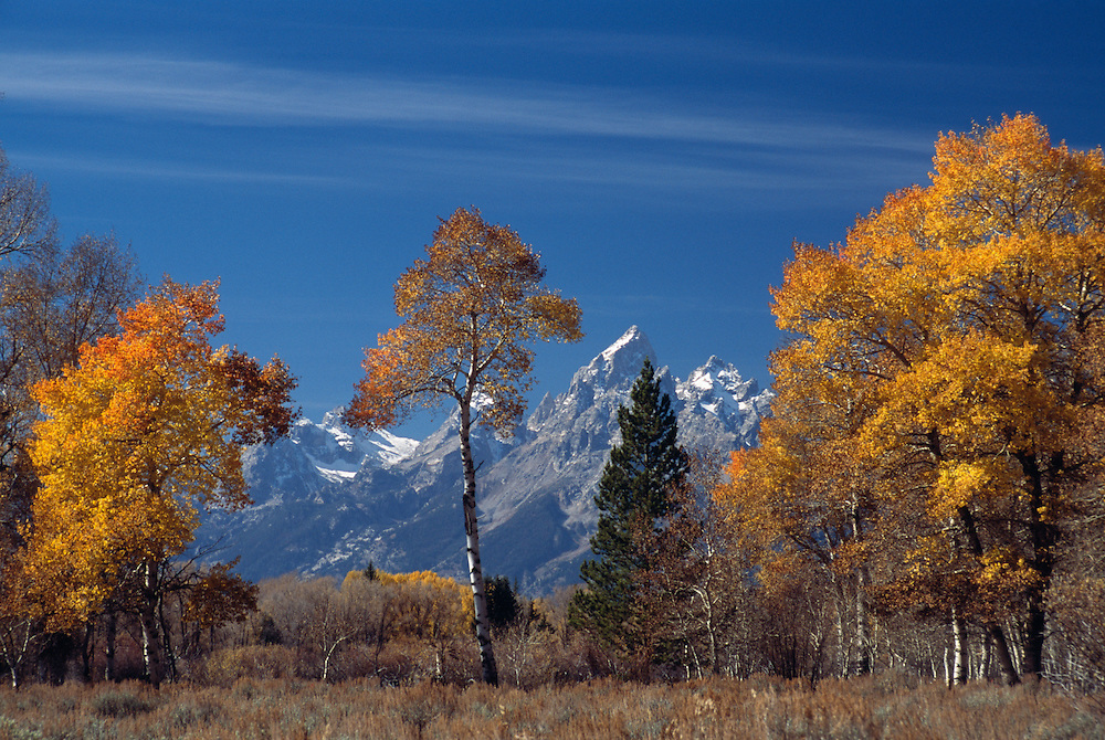 USA, Wyoming, autumnal trees with mountains in the background