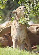 May 15, 2012: Oklahoma City Zoo