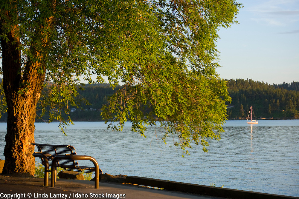 Idaho, Coeur d' Alene. A sailboat floats on calm water in Wolf Lodge Bay, with a bench along Lakeshore Drive in summer.