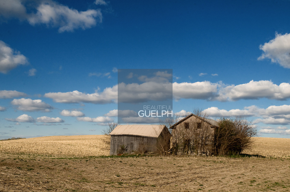A lonely pair of old farm buildings in a field just outside Guelph, Ontario.  Photo by Ian Thomas