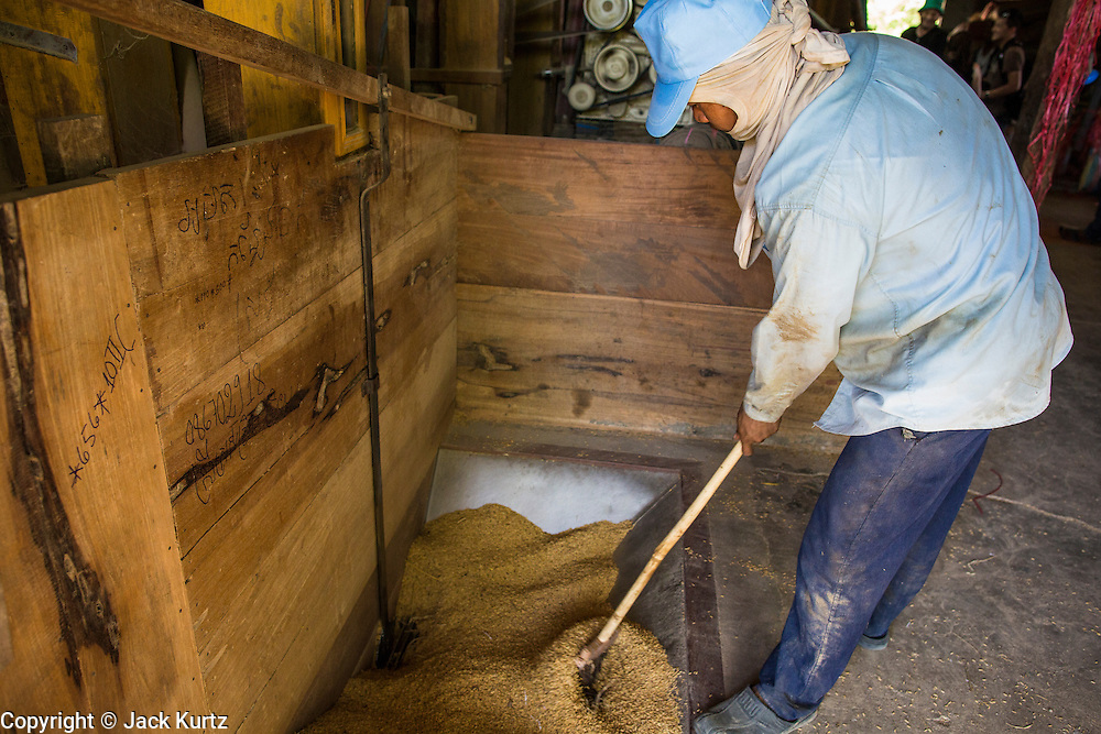 "29 JUNE 2013 - BATTAMBANG, CAMBODIA:   A worker in a rice mill pushes unprocessed rice still in its husks into the milling process. The mill is next to the tracks that carry the ""bamboo trains."" The bamboo train, called a norry (nori) in Khmer is a 3m-long wood frame, covered lengthwise with slats made of ultra-light bamboo, that rests on two barbell-like bogies, the aft one connected by fan belts to a 6HP gasoline engine. The train runs on tracks originally laid by the French when Cambodia was a French colony. Years of war and neglect have made the tracks unsafe for regular trains.  Cambodians put 10 or 15 people on each one or up to three tonnes of rice and supplies. They cruise at about 15km/h. The Bamboo Train is very popular with tourists and now most of the trains around Battambang will only take tourists, who will pay a lot more than Cambodians can, to ride the train.       PHOTO BY JACK KURTZ"