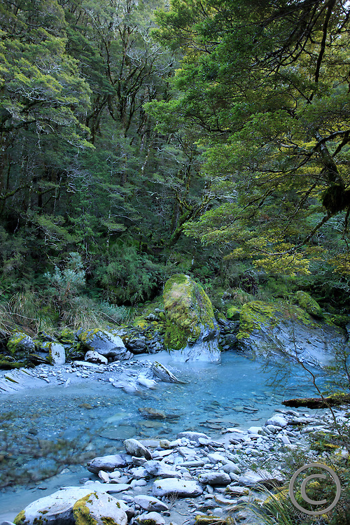 The walking trail to Fox Glacier winds through lush green forests, in Wanaka, South Island, New Zealand.